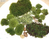 Live Moss Assortment for Terrariums - Frog, Haircap, Cushions, Rocks, Lichen