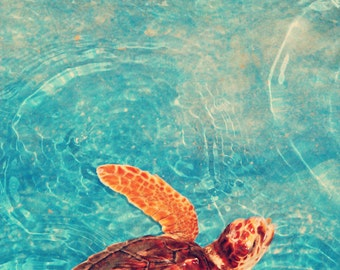 Out For a Swim, Turtle Sanctuary, Animal Child's Room Wall 8x12 10x15 12x18 16x24 Fine Art Photography