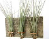 3 mounted Barn Wood Air plant base Large Form Junecea