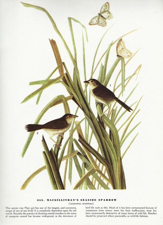 70s Wall Art Home Decor Audubon Bird Prints 355 and 356 Paper Ephemera Collectible Fine Condition