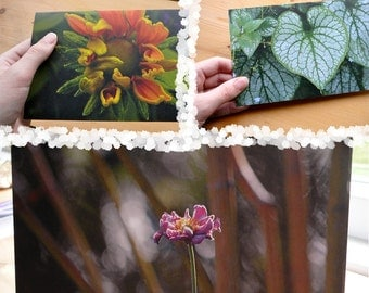7 Recycled Blank Nature Photo Cards of Vancouver Island, winter, plants, changing seasons, heart, bold, art, Support Lyme Disease Foundation