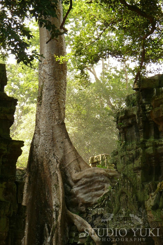 Woodland Photography - Tree - Fine Art Travel Print - Nature 8x12 Signed Art Print - Ta Prohm, Angkor, Cambodia - Serenity