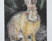 Snowshoe Hare Summer Attire etching hand-pulled and hand colored