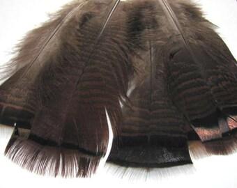 Ozark Iridescent Turkey Tail - Natural