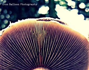 MAGIC MACRO MUSHROOM Unique Photograph