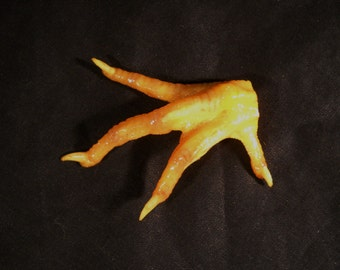 Real Chicken Foot Claw Taxidermy small hand, bones, feet, claws, and skin