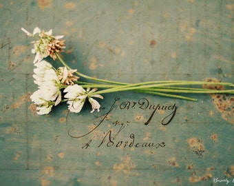 clover, flowers, green, typography, vintage, fine art photography