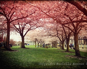 Portland Oregon Waterfront Park Springtime Cherry Blossoms Pink--Fine Art Lomography 8x12