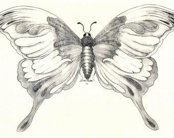 Butterflies- A giclee print of an original pen & ink drawing by Louise Maclaren 2007