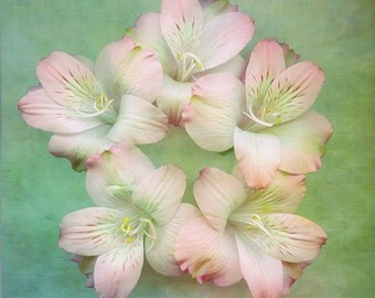Flower Photography, Fine Art Photograph, Freesia, Pink Green Pastel Nature Landscape, Wedding Gift, Nursery, Flower Art, Floral Portrait