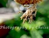 Death at Birth (preying mantis) print