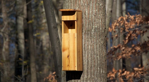 Screech Owl Box, Slot Entrance - by HOOT