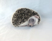 "Hedgehog ""Sleepyhead""... I will make this item for your order"