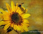Sunflower with Bumble Bee, Fine Art Photogrpahy, Flower Photography, Floral Photography, Botanical Photography