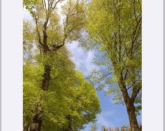 Spring Mountain Forest Fine Art Print - Green and Blue