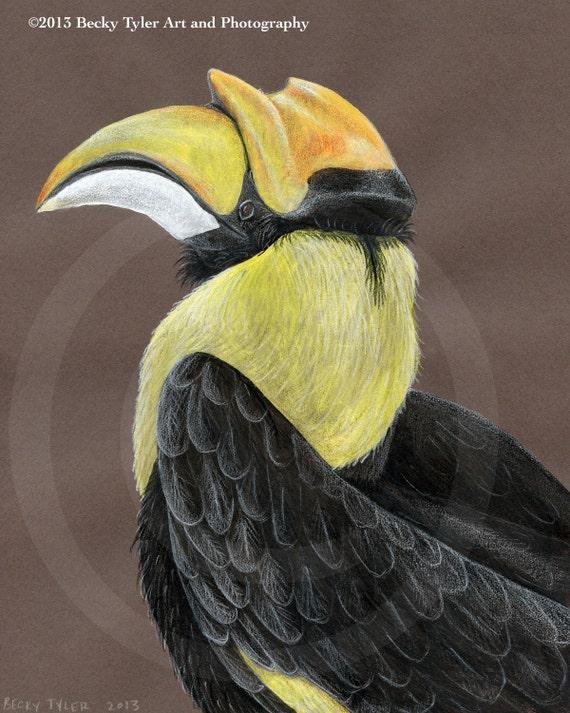 Indian Hornbill Drawing Great Indian Hornbill Original