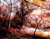 Fine Art Photography Digital Download Forest Woodland Autumn Fall Red Orange Leaves Trees Photography Surreal Sunlight Printable Art Photo