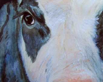 Cow Morena Artina Friesian Calf Giclee Print Acrylic Watercolour and Ink Painting on Watercolour Paper