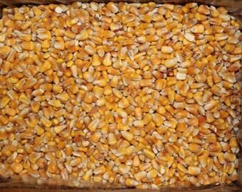 CORN SUPPLY 10 lbs Whole Feed Corn for Cornhole Bags, Heating Pads, Crafts, Deer, Bird, Squirrel, Wildlife