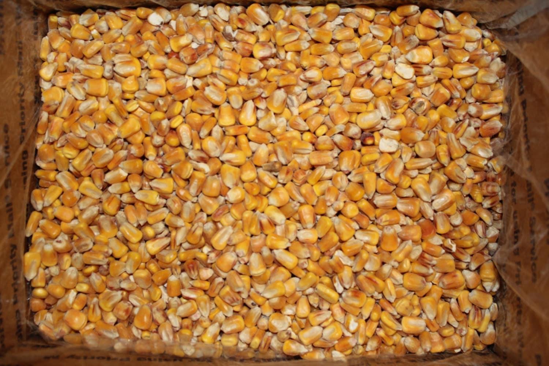Corn Supply 10 Lbs Whole Feed Corn For Cornhole Bags Heating