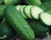 Heirloom, Boston Pickling Cucumber, Great for Making Your Own Pickles, Garden, 20 Seeds