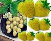 Heirloom, Yellow Wonder Wild Yellow Strawberry, 25 Seeds
