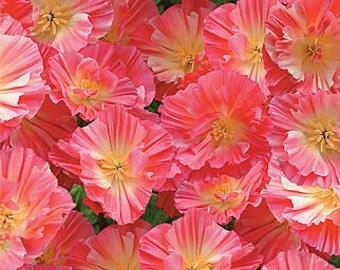 Rare, California Poppy, Watermelon Heaven, Flower Garden, 10 Seeds
