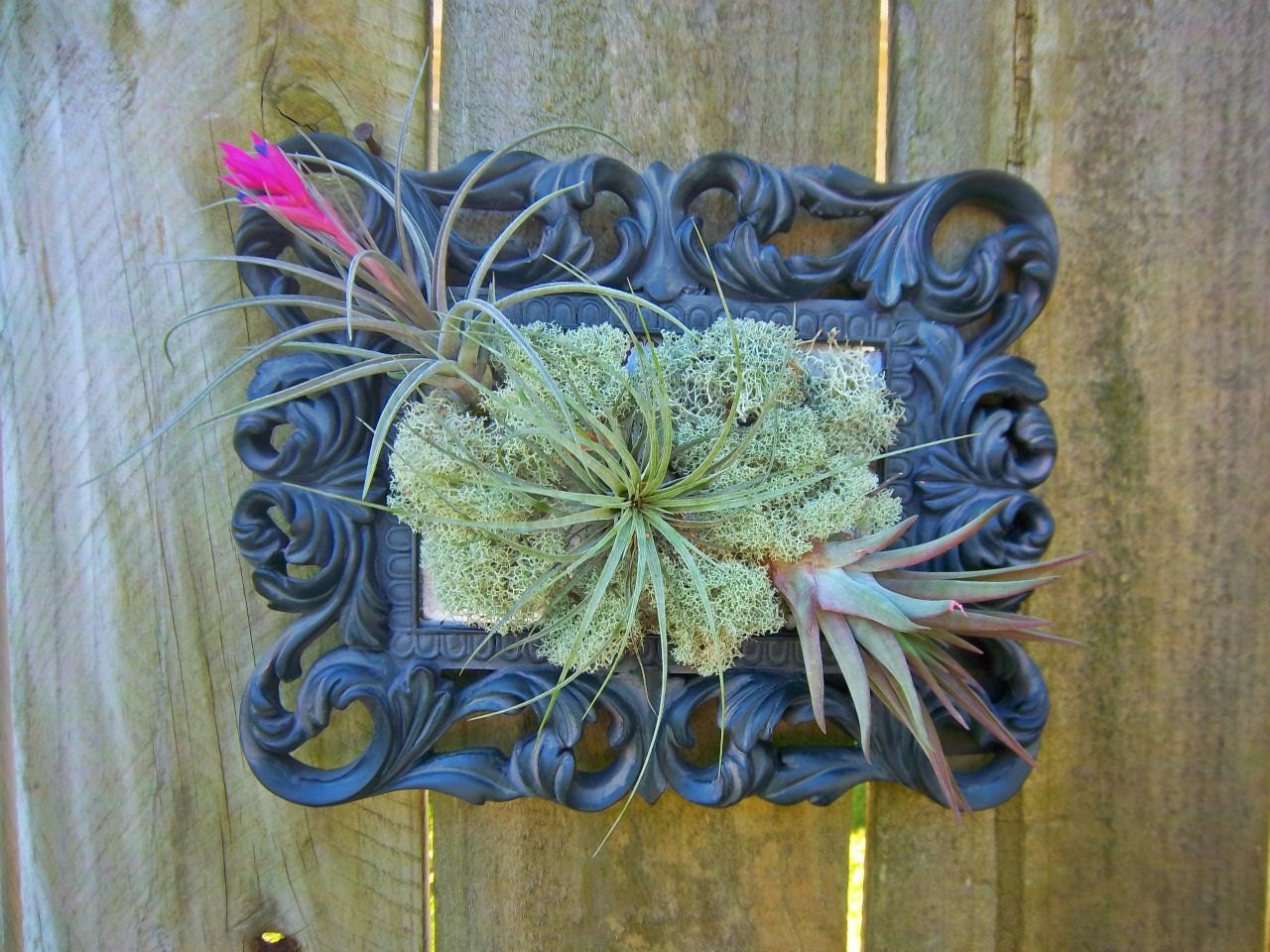 Air plant wall art for Air plant wall art