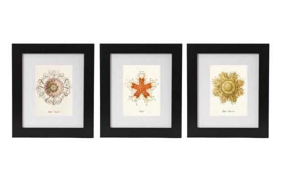 Jellyfish and Starfish Art Prints, Posters, Ernst Haeckel Illustrations, Nautical, Marine Life, Beach Art, Coastal Living Wall Art, Giclee