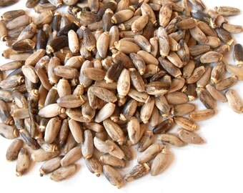 Organic Milk Thistle Seed - Delicious and Wholesome - Holy Thistle, Lady's Thistle - One Ounce