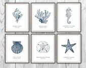 Nautical Sea Life - Set of 6 Art Prints - Blue Navy Scientific Beach - Species Conch Shell, Seahorse, Coral, Sand Dollar - BySamantha
