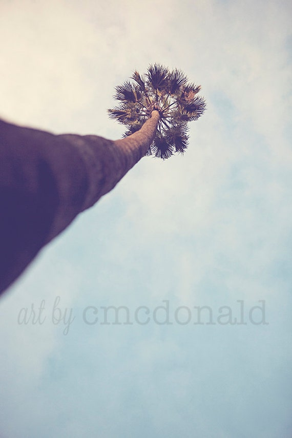 Strength - Photographic Print - Palm, Tree, California, SoCal, Los Angeles, Blue, Sky, Natural, Decor, Wall, Hanging, Home,