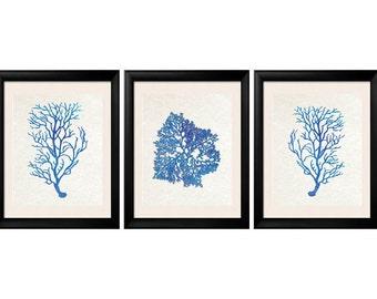 Blue Coral Prints, Summer Decor, Coral Prints, Blue Coral Art, Coral Wall Art Set of Three Prints