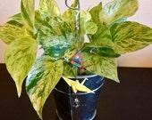 Origami Crane Plant Decoration