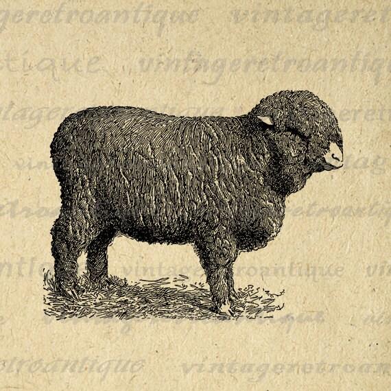 Woolly sheep coupon code
