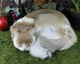 Gray Grey Sleeping Cat Adorable Furry Animal Taxidermy Figurine Decor Kitty