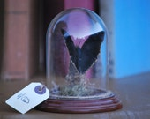 Butterfly preserved in glass dome on wood base