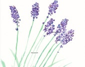 Lovely Lavender - Art Print Watercolor