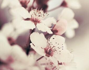 Home décor prints, Spring flower art, Living room decor // Purple plum tree blossom No. 3
