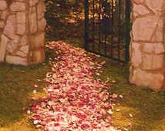 ROSE PETALS, 100 Cups, Wedding Confetti, Petal Toss, Bridal Paths, biodegradable Petals, dried Rose Petals, for fairy tale endings