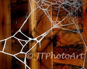 Frozen spider web, 8x10 fine art print