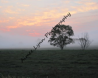 Foggy Sunrise Close up  - Fine Art Photography