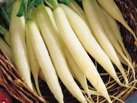 Long White Icicle Radish Seeds 600 White Radish Seeds