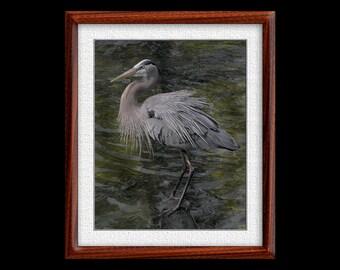 Great Blue Heron Print - 8x10 or 11x14 Great Blue Heron Photograph - Bird Photograph - Bird Print - Great Blue Print- Heron Art (P12)