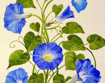 Blue Morning Glories Original