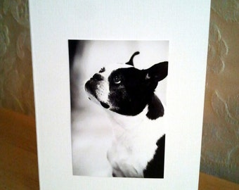 Set of 4 BOSTON TERRIER Handmade Note Cards Stationery with Envelopes - Boston Terrier Rescue Charity Cute Cards BTRTOC