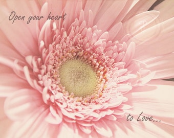 Heart, pink gerber, romance, aged, quote