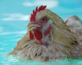 Nursery Art, Chicken, Swimming Pool, Summer, Whimsy, Fine Art Photo