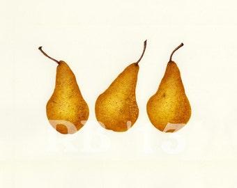 "Bosc Pear Trio 16""x12"" Limited Edition Giclee Print (5/50)"