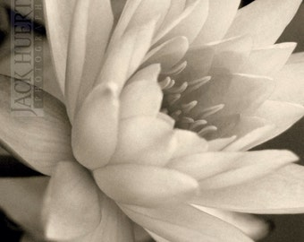 Water Lily Photo - 12x12 Photograph - Waterlily Flower Floral Print Flower Photography Flora Botanical Black & White Toned